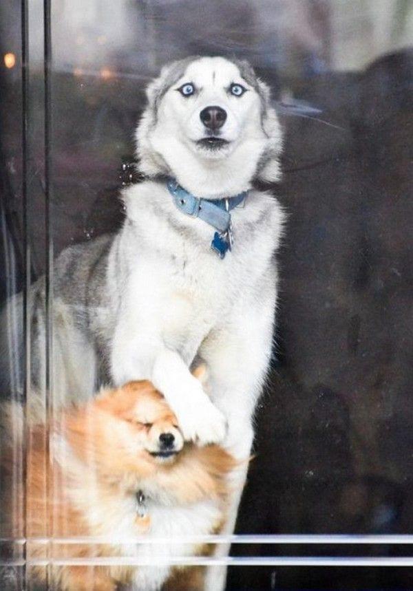 perros-inmortalizados-momento-gracioso-08