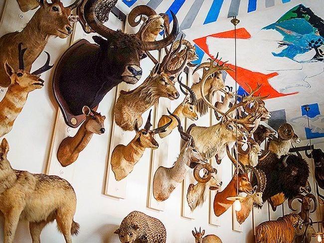 peticion caza ups destacada