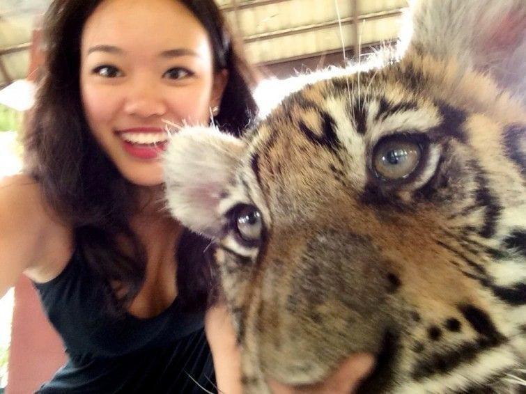 tinder foto tigre