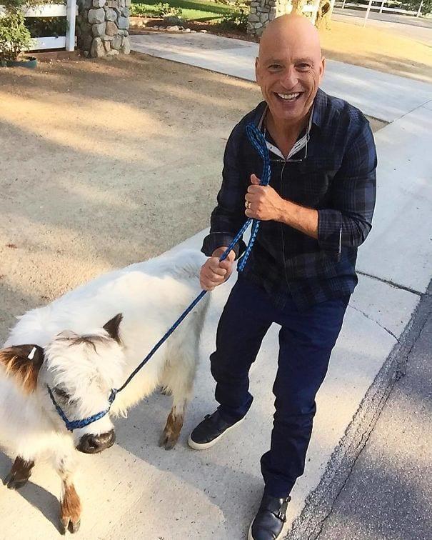vacas-perros4