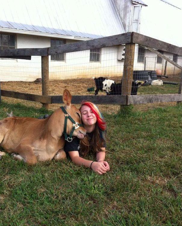 vacas-perros7