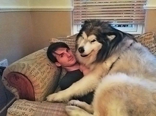 amor-perros3