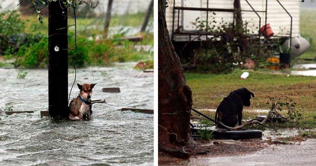 animales olvidados huracan
