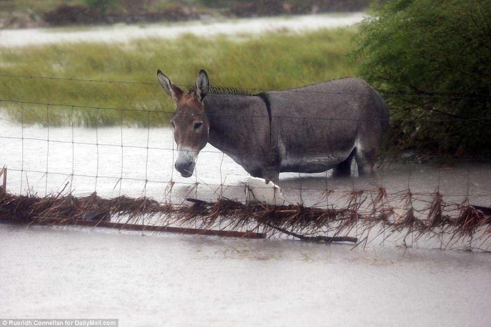 animales-olvidados-huracan4