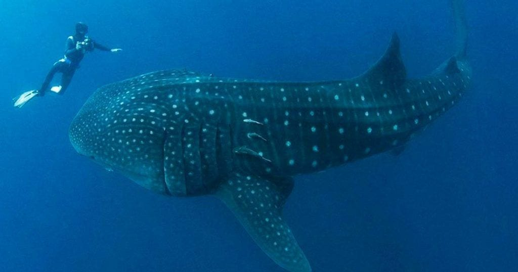 ballena-rescate-dest