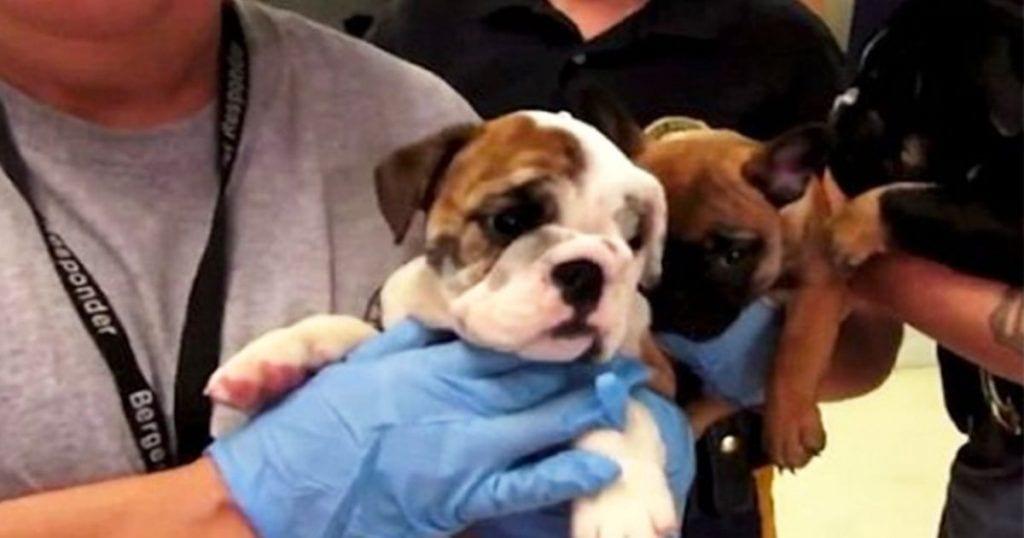 cachorros rescatados destacada