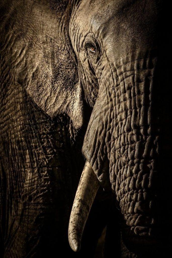 Los 13 finalistas del concurso Wildlife photografher of the year 2017
