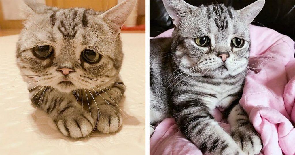 Te presentamos al gatito con cara triste que ha enamorado a la red