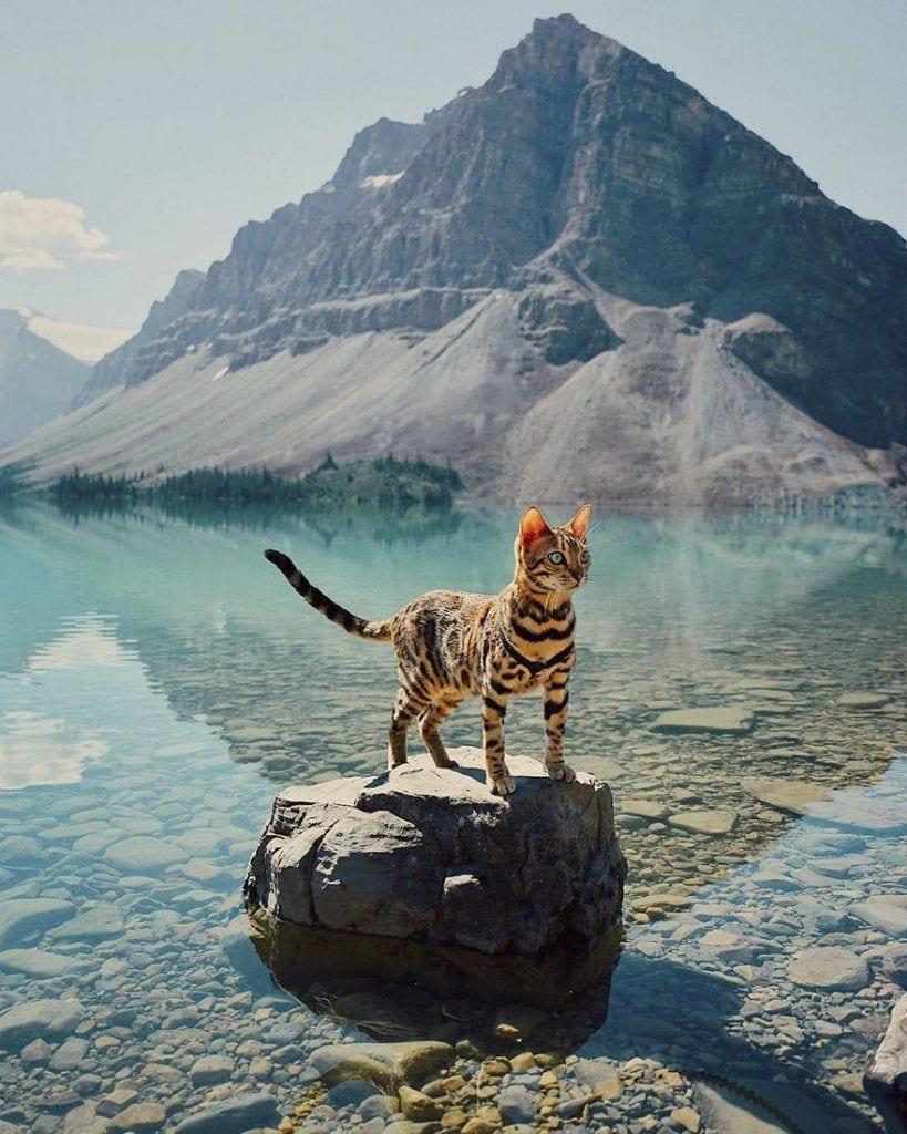 gato-aventurero1