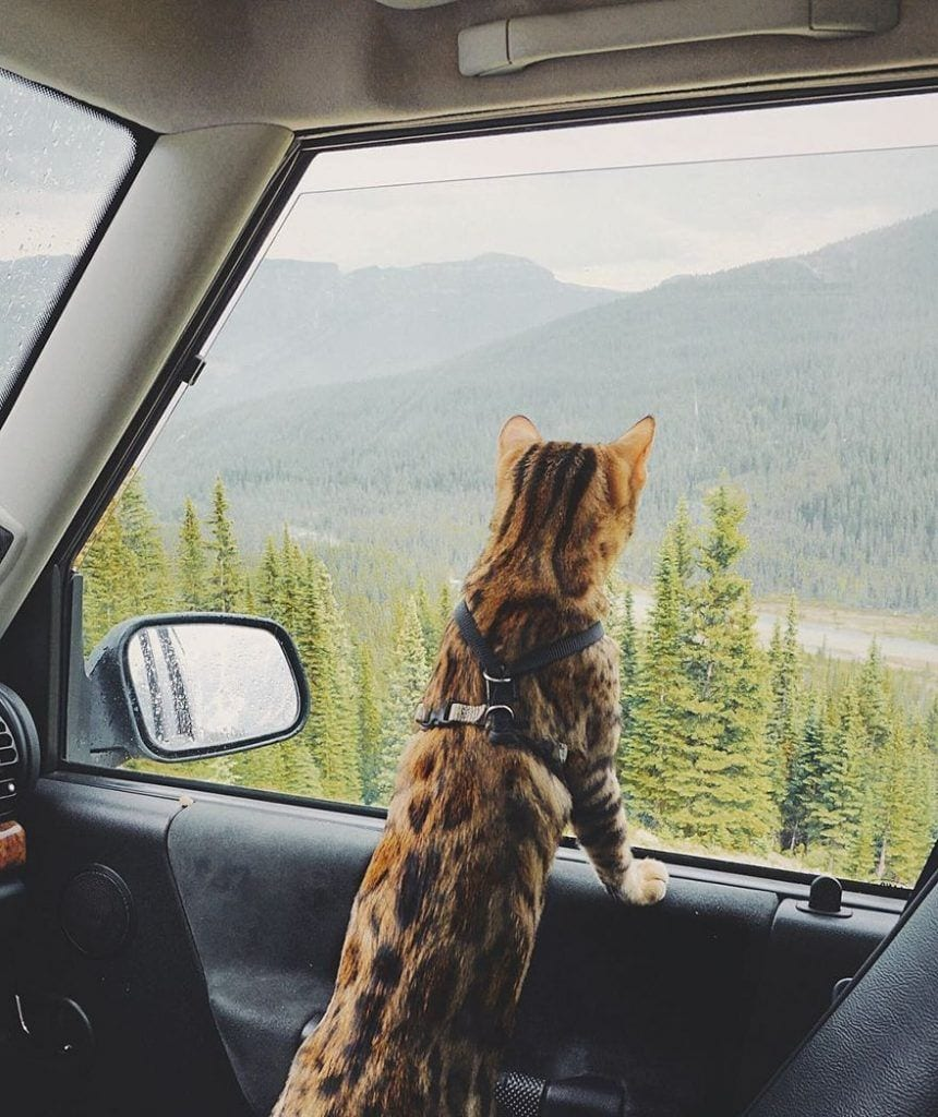 gato-aventurero11