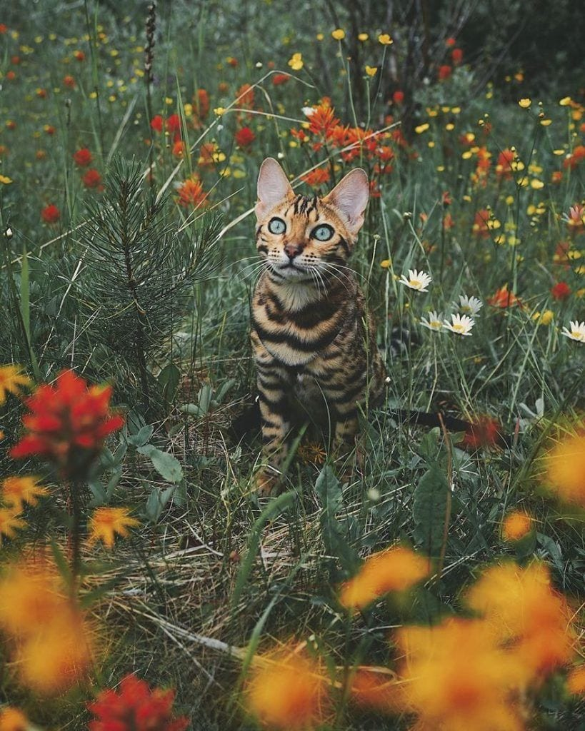gato-aventurero2