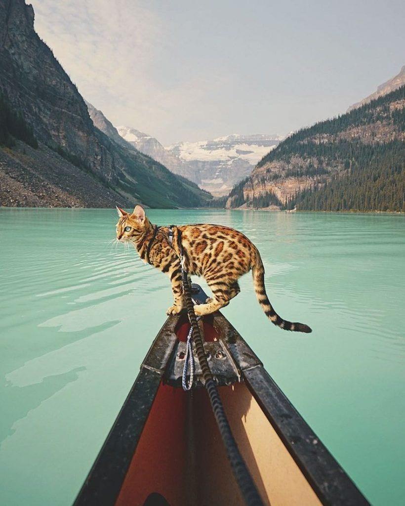 gato-aventurero3