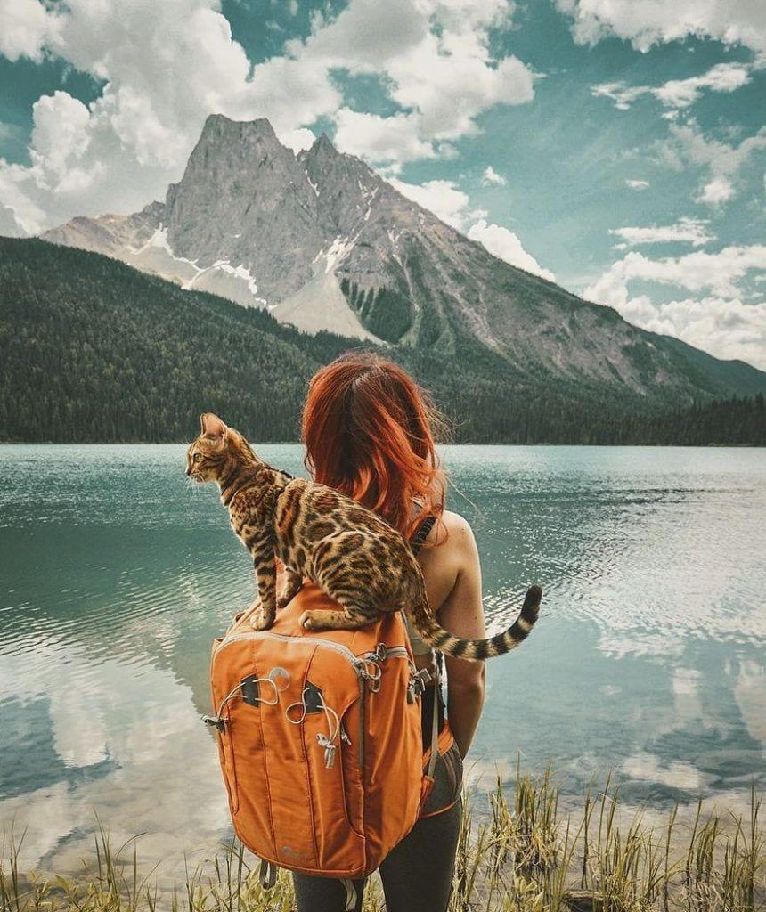 gato-aventurero4