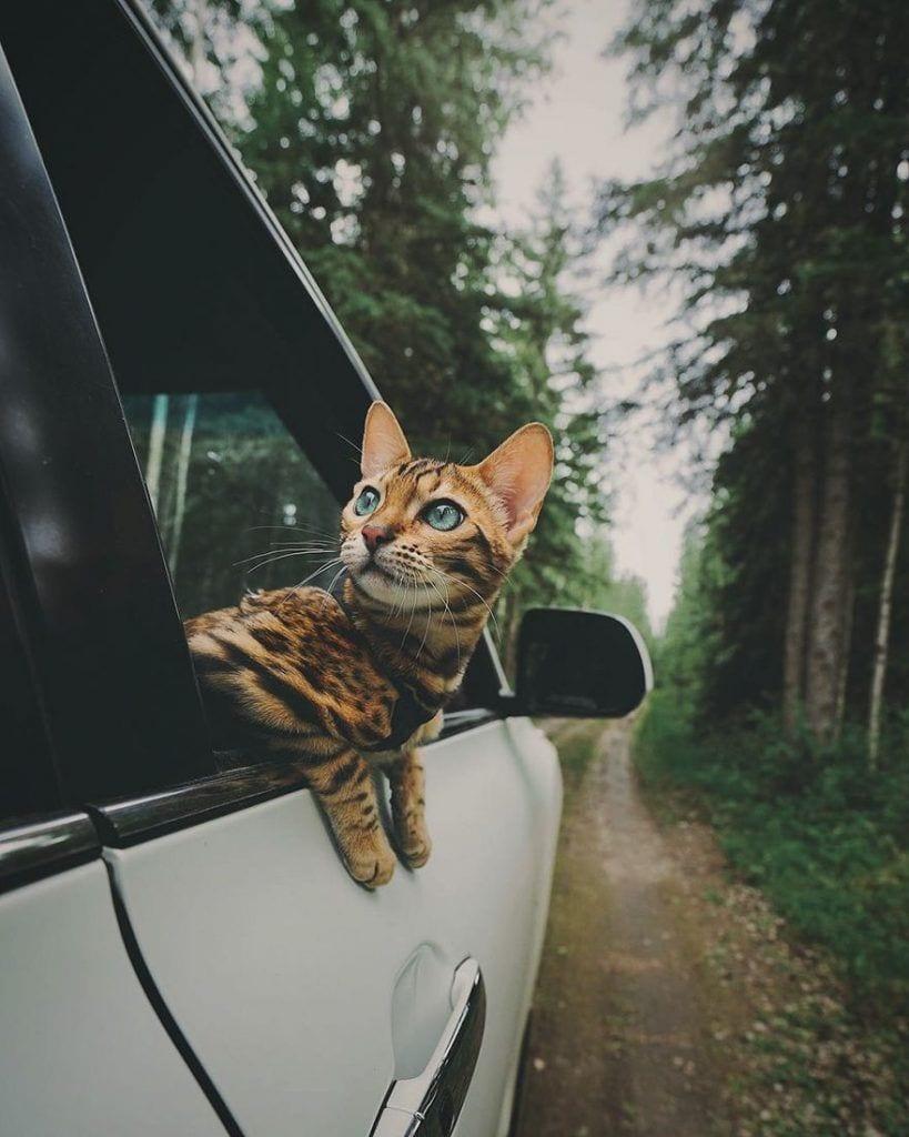 gato-aventurero5