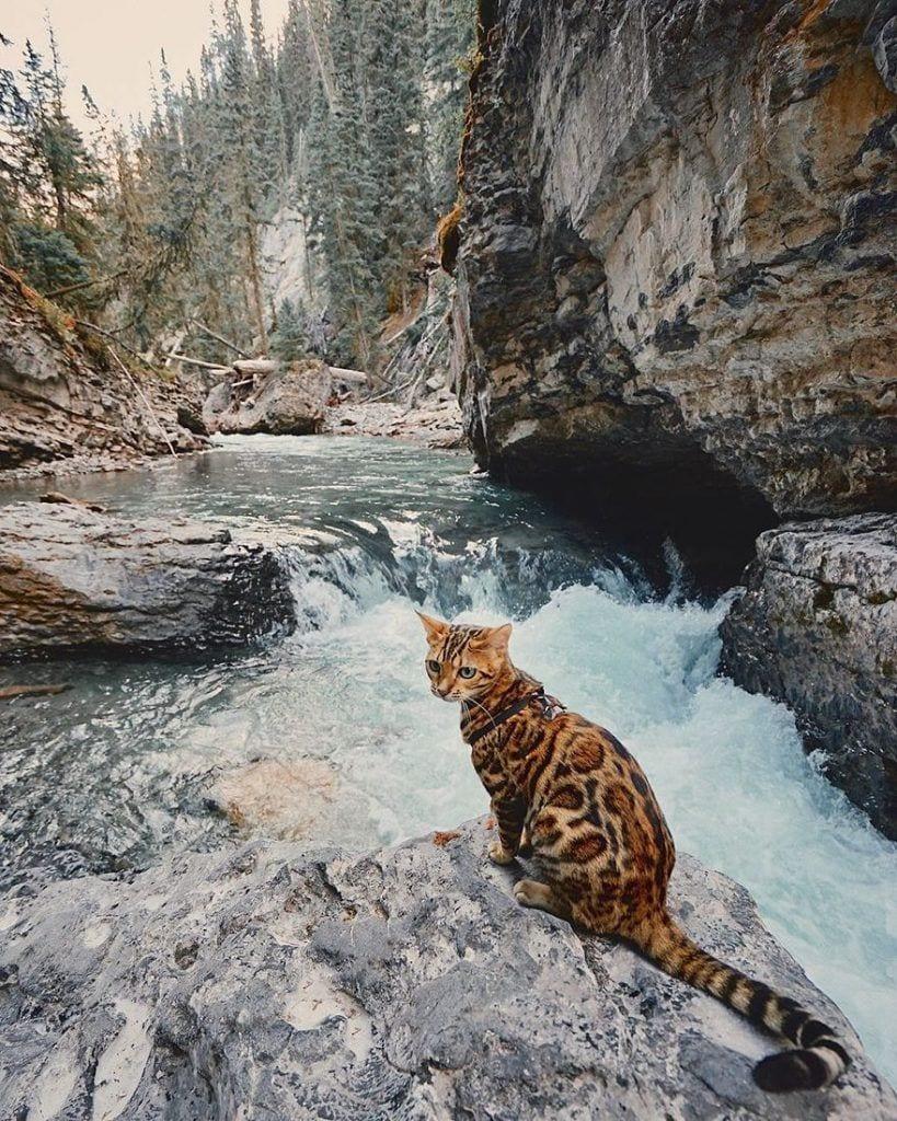 gato-aventurero6