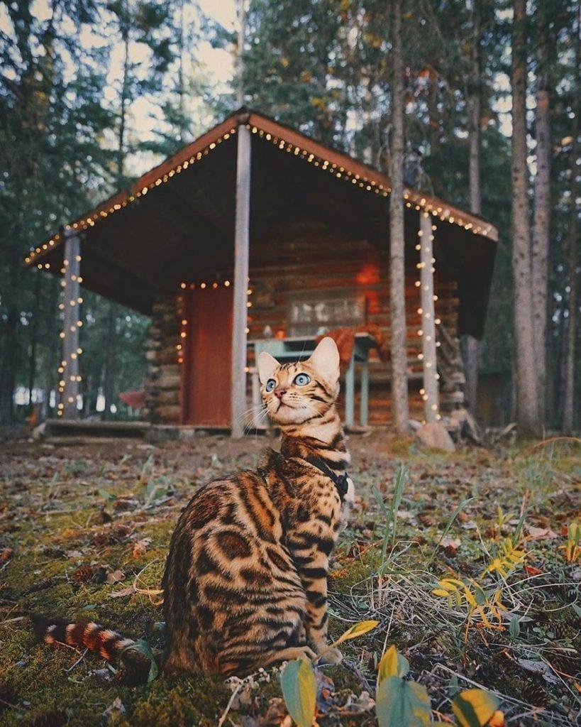 gato-aventurero8