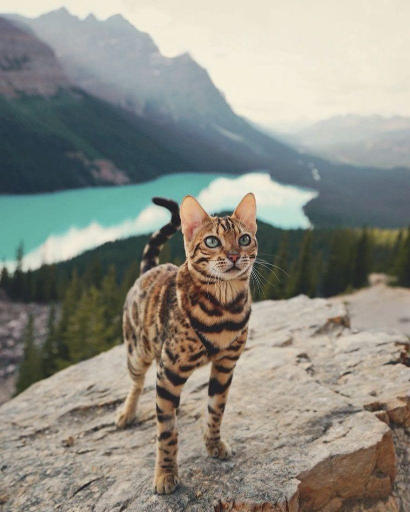 gato-aventurero9