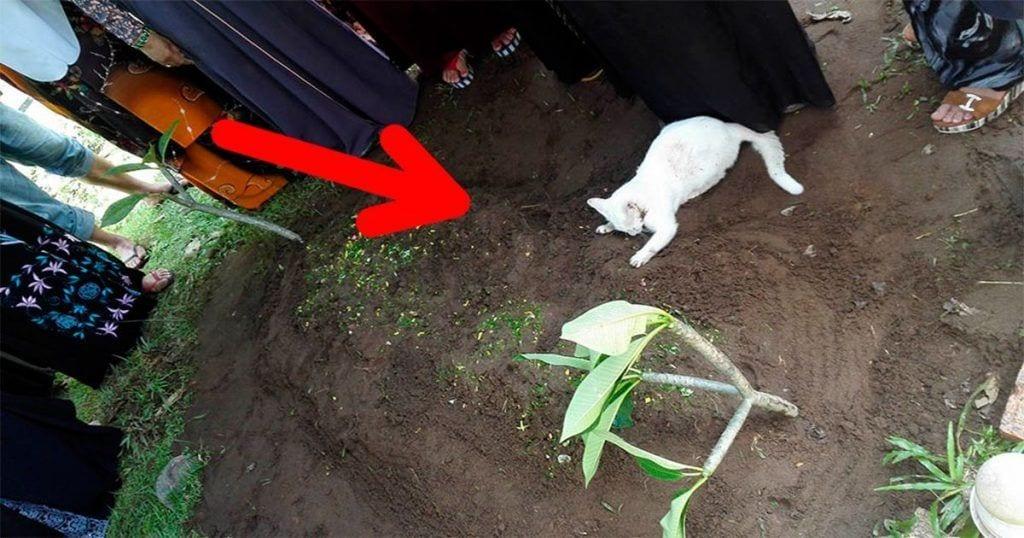 Un misterioso gato blanco aparece junto a una tumba en Malasia
