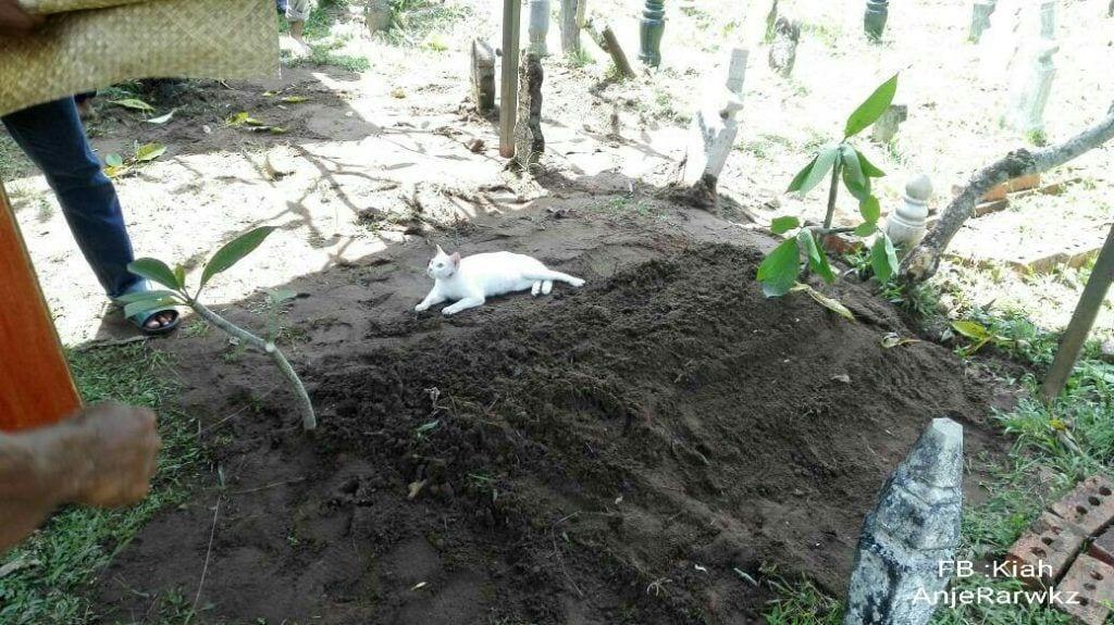 gato-blanco-tumba2