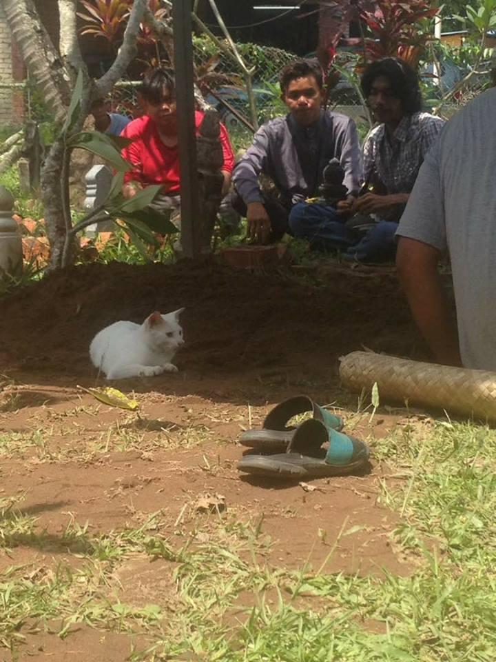 gato-blanco-tumba3