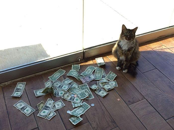gato-recaudador-01