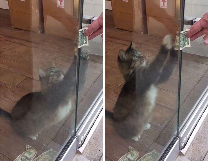 gato-recaudador-02