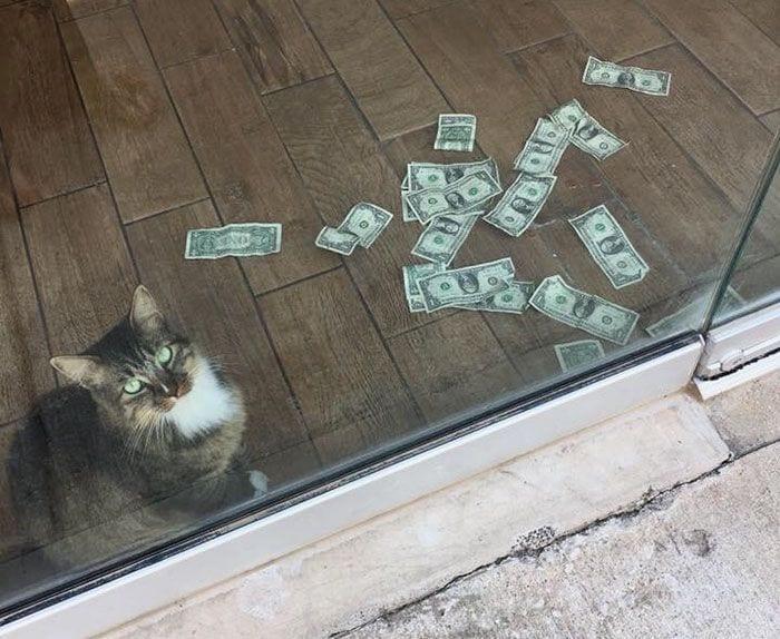 gato-recaudador-08