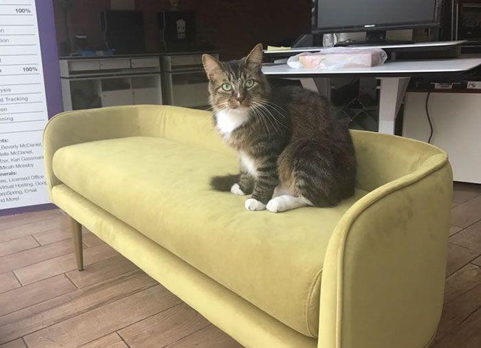 gato-recaudador-09