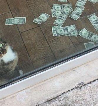 gato recaudador destacada