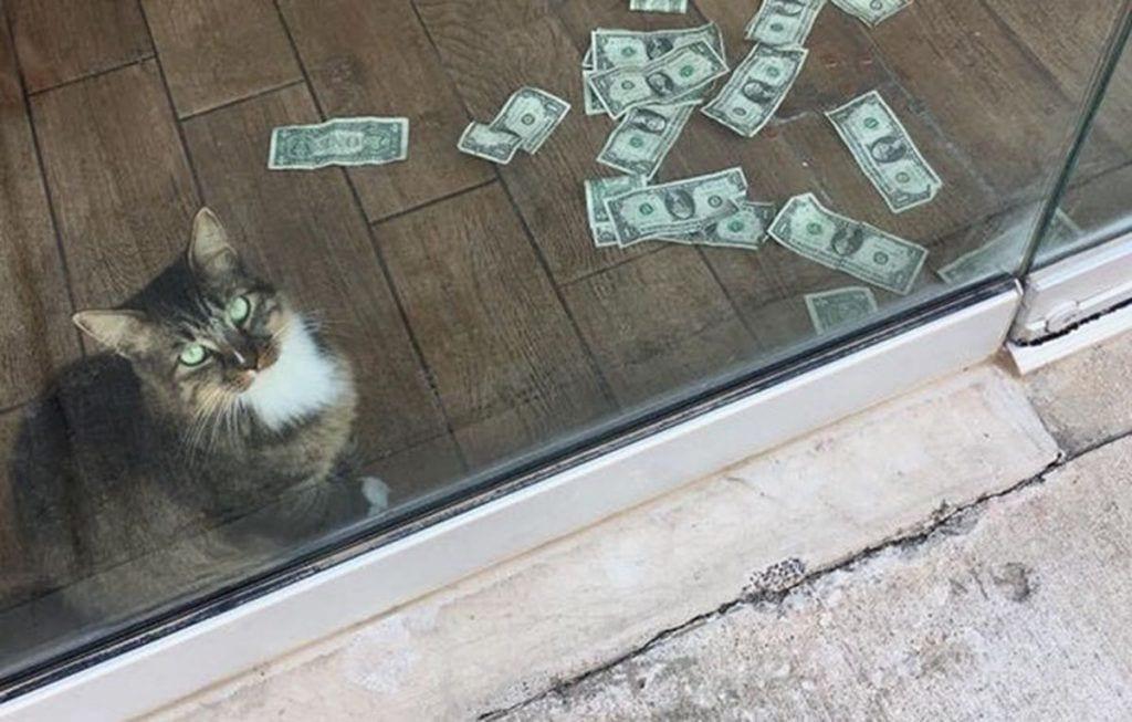 Gato rescatado recauda dinero para sin techo