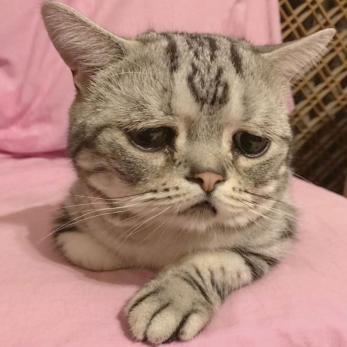 gato-triste3