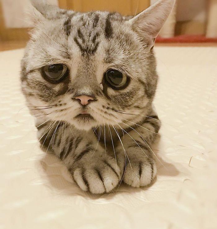 gato-triste4