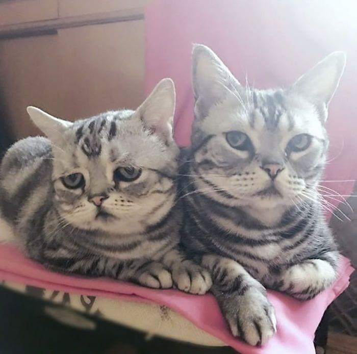 gato-triste7