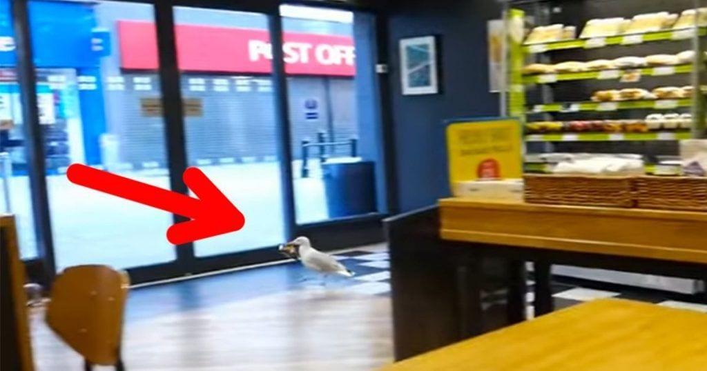 Esta gaviota entra en una tienda y hace algo que te dejará con la boca abierta