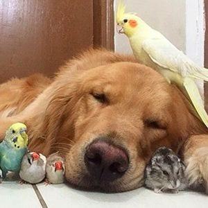 Casas con más mascotas que personas