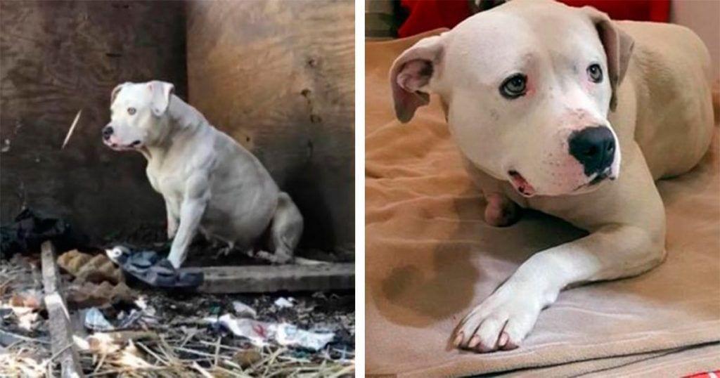 Esta perra ha estado encadenada durante 5 años, hasta que se mordió su propia pata para liberarse