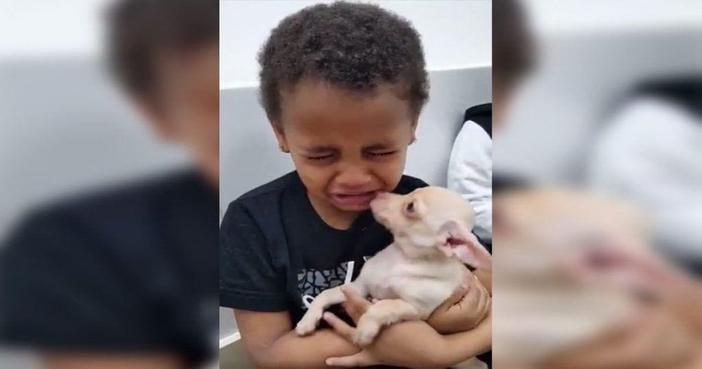 Esta niña tiene una emotiva reacción cuando conoce a su primera mascota