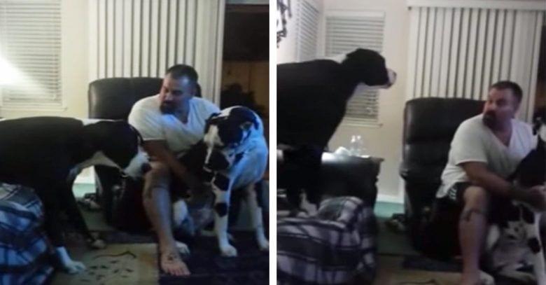 perro-celoso