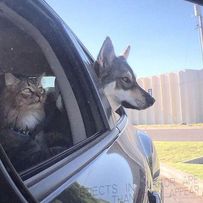 perro-gato-amigos-01