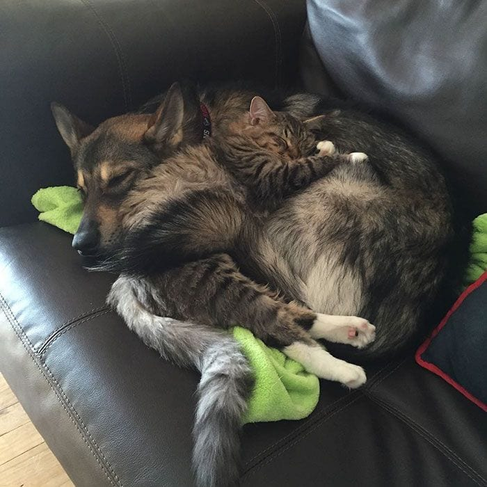 perro-gato-amigos-07