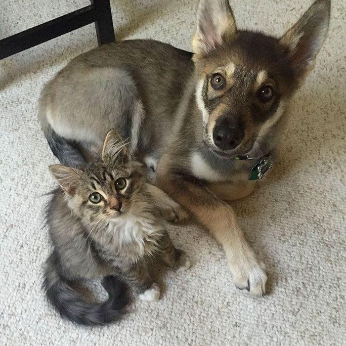 perro-gato-amigos-08