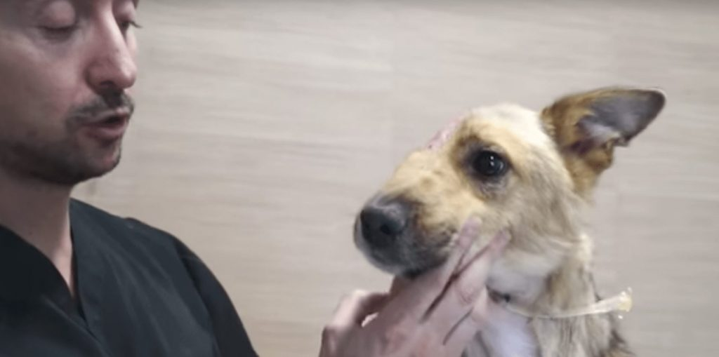 perro-media-cara-01