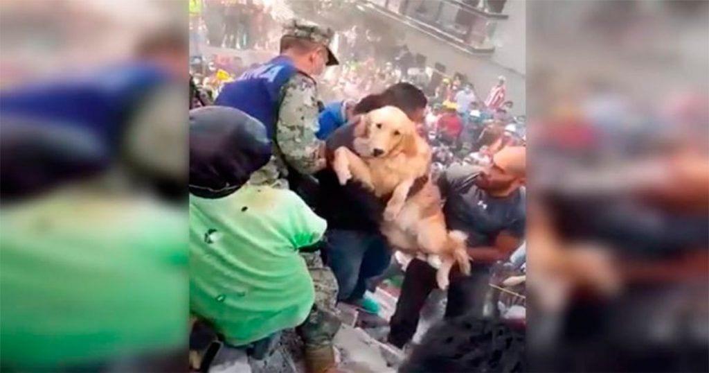 Este perro logró salir con vida de entre los escombros que ha dejado el terremoto de México