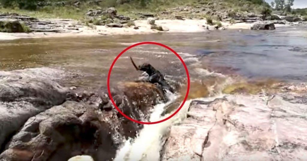 perro rio rescate