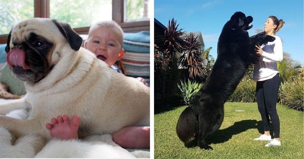 Estos 10 perros aman a sus dueños y lo demuestran de la manera más adorable posible