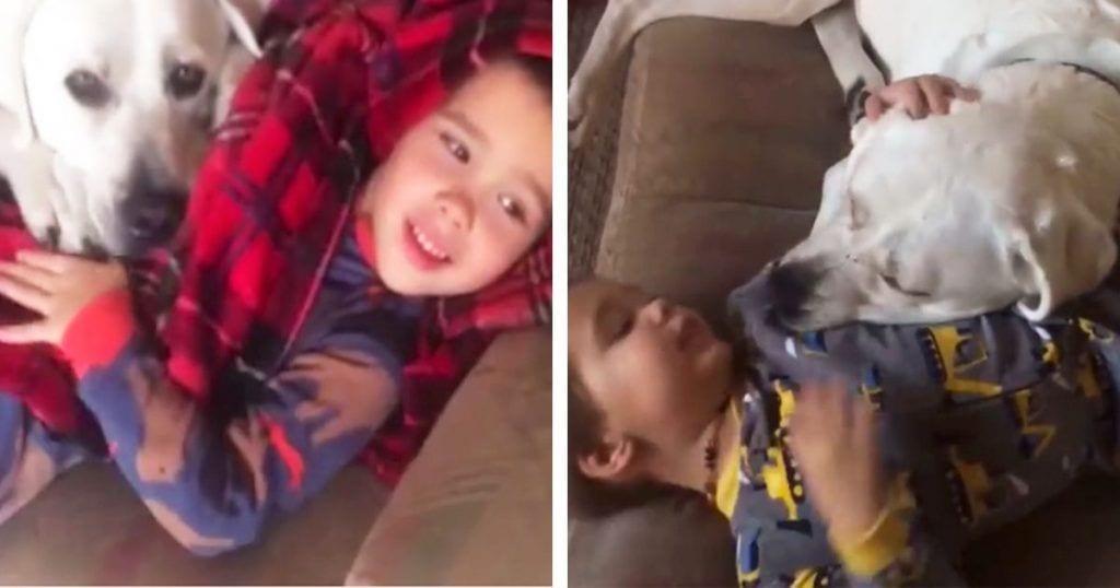 perros autismo
