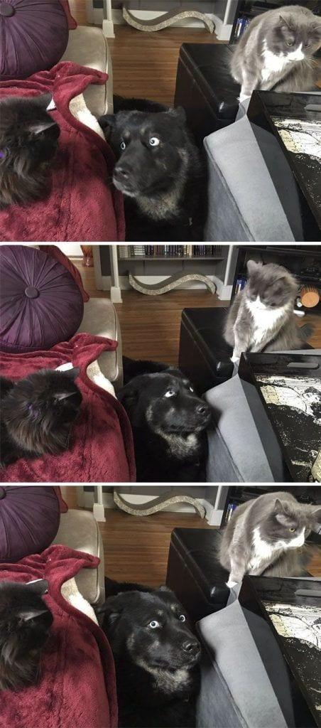 perros-gatos-01