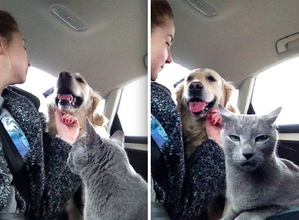 perros-gatos-04