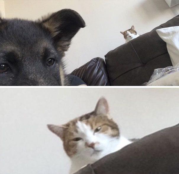 perros-gatos-08