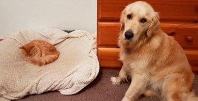 perros gatos dest